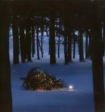 treeforrest.jpg